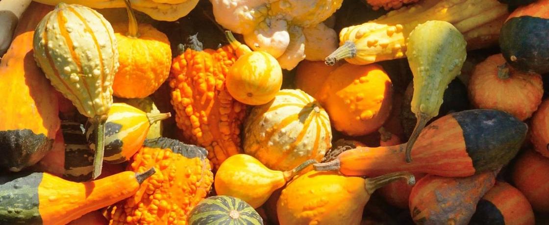 closeup photograph of gourds