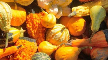closeup photograph of gourds